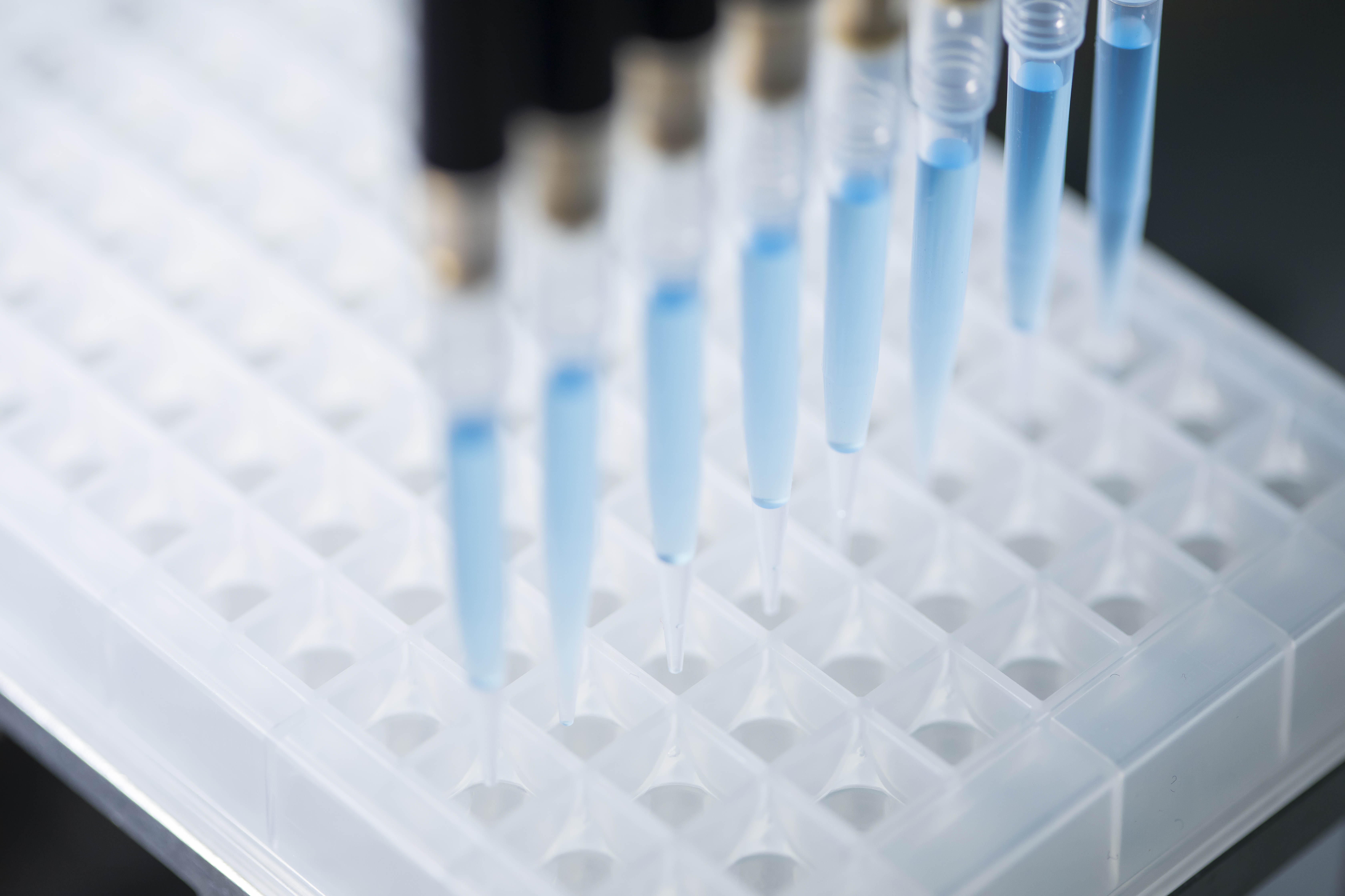 Blood samples are added to the microtiter plates with a ripette to perform rapid corona tests. (Photo: Matthias Baumgartner Vi-deophotography)